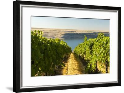Washington State, Tri-Cities. the Benches Vineyards-Richard Duval-Framed Photographic Print