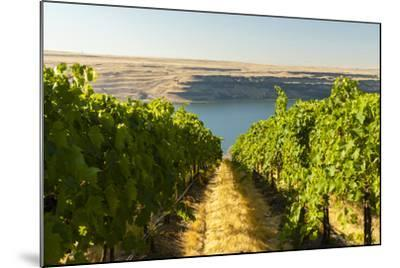 Washington State, Tri-Cities. the Benches Vineyards-Richard Duval-Mounted Photographic Print