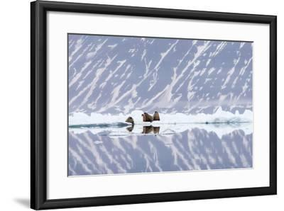 Norway, Svalbard, Pack Ice, Walrus on Ice Floes-Ellen Goff-Framed Photographic Print