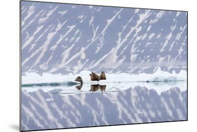 Norway, Svalbard, Pack Ice, Walrus on Ice Floes-Ellen Goff-Mounted Photographic Print