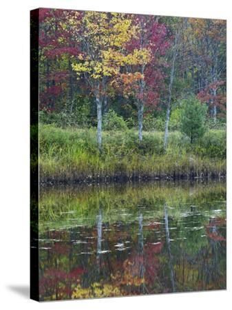 Northeast Creek Surrounded by Autumn Foliate, Desert Island, Maine-Tim Fitzharris-Stretched Canvas Print