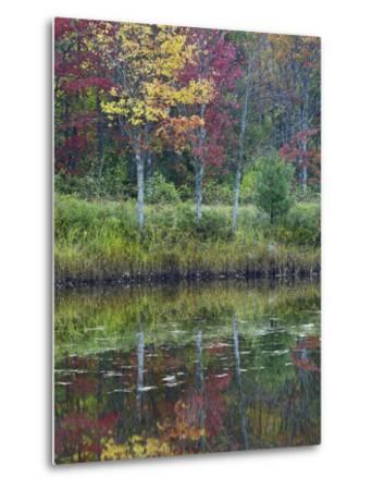 Northeast Creek Surrounded by Autumn Foliate, Desert Island, Maine-Tim Fitzharris-Metal Print