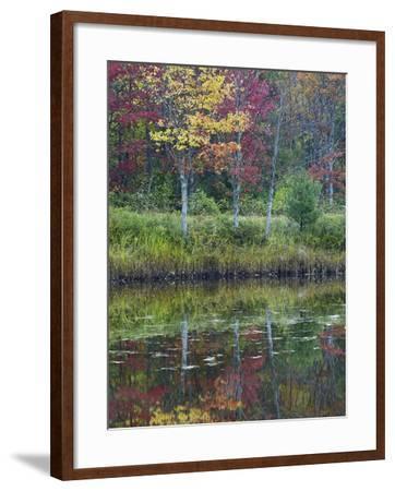 Northeast Creek Surrounded by Autumn Foliate, Desert Island, Maine-Tim Fitzharris-Framed Photographic Print