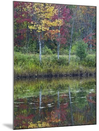 Northeast Creek Surrounded by Autumn Foliate, Desert Island, Maine-Tim Fitzharris-Mounted Photographic Print