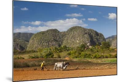 Cuba, Vinales. a Farmer Plows His Field with Brahma Cows-Brenda Tharp-Mounted Photographic Print