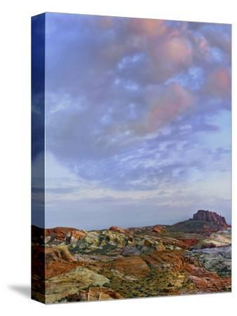 Colorful Landscape of Rainbow Vista, Valley of Fire State Park, Nevada, Usa-Tim Fitzharris-Stretched Canvas Print