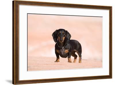 Doxen at Lake Powell-Zandria Muench Beraldo-Framed Photographic Print