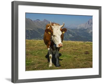 Switzerland, Bern Canton, Mannlichen Area, Swiss Cow in Alpine Setting-Jamie And Judy Wild-Framed Photographic Print
