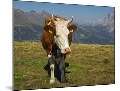 Switzerland, Bern Canton, Mannlichen Area, Swiss Cow in Alpine Setting-Jamie And Judy Wild-Mounted Photographic Print