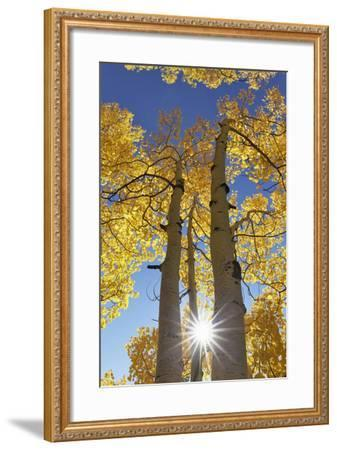 Colorado, San Juan Mountains. Aspen Trees in Autumn Color-Jaynes Gallery-Framed Photographic Print