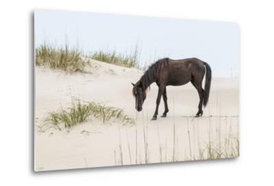 Wild Mustangs in Currituck National Wildlife Refuge, Corolla, Outer Banks, North Carolina-Michael DeFreitas-Metal Print