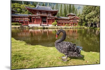 Byodo-In Temple, Valley of the Temples, Kaneohe, Oahu, Hawaii-Michael DeFreitas-Mounted Photographic Print