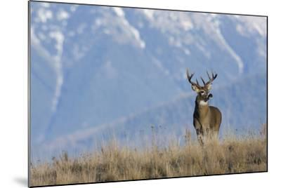 White-Tailed Deer Buck-Ken Archer-Mounted Photographic Print