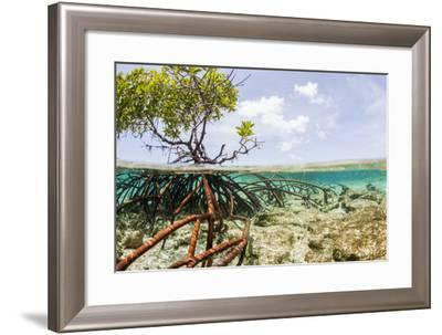 Over and under Water Photograph of a Mangrove Tree , Background Near Staniel Cay, Bahamas-James White-Framed Photographic Print