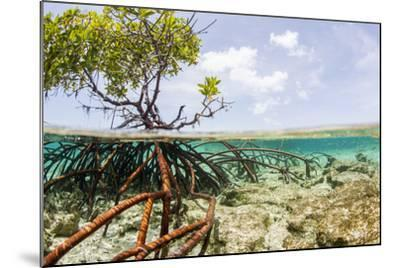 Over and under Water Photograph of a Mangrove Tree , Background Near Staniel Cay, Bahamas-James White-Mounted Photographic Print