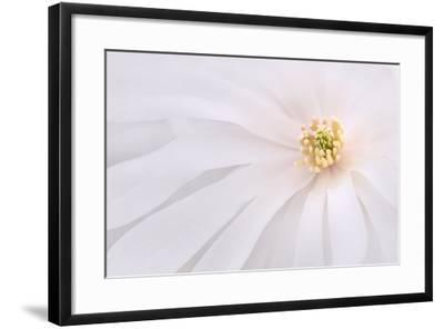 Maine, Harpswell. Light Pink Magnolia Detail-Jaynes Gallery-Framed Photographic Print