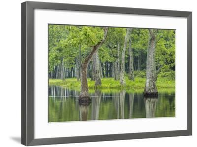 Louisiana, Miller's Lake. Tupelo Trees Reflect in Water-Jaynes Gallery-Framed Photographic Print