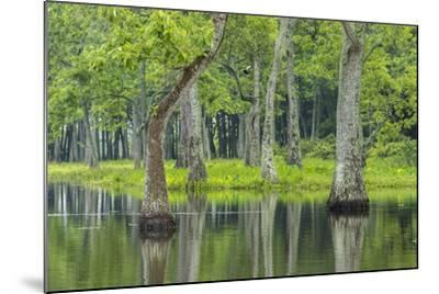 Louisiana, Miller's Lake. Tupelo Trees Reflect in Water-Jaynes Gallery-Mounted Photographic Print