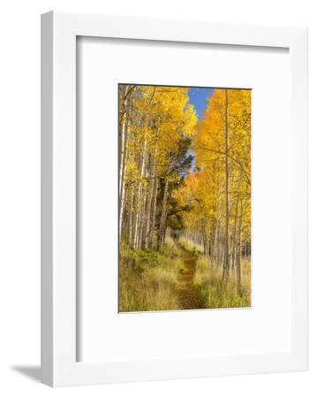 Utah, Fishlake National Forest. Trail in Aspen Trees-Jaynes Gallery-Framed Photographic Print
