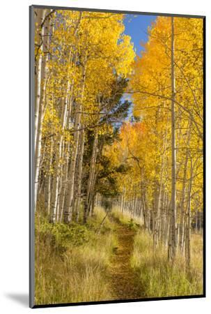 Utah, Fishlake National Forest. Trail in Aspen Trees-Jaynes Gallery-Mounted Photographic Print