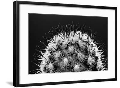 Black and White Pattern of Small Cactus Spines-Adam Jones-Framed Photographic Print
