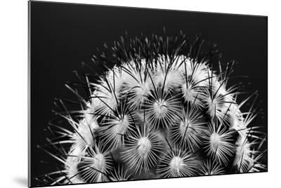 Black and White Pattern of Small Cactus Spines-Adam Jones-Mounted Photographic Print