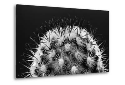 Black and White Pattern of Small Cactus Spines-Adam Jones-Metal Print