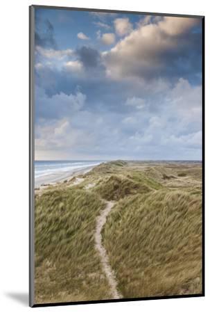 Denmark, Jutland, Danish Riviera, Hvide Sande, Coastal Dunes, Dusk-Walter Bibikow-Mounted Photographic Print