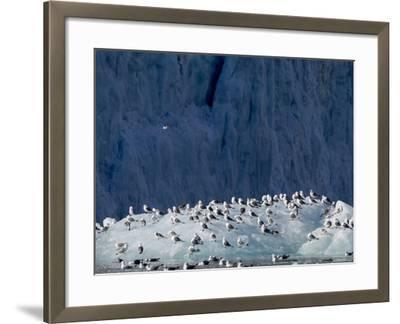 Arctic Ocean, Norway, Svalbard. Kittiwake Birds on Iceberg-Jaynes Gallery-Framed Photographic Print