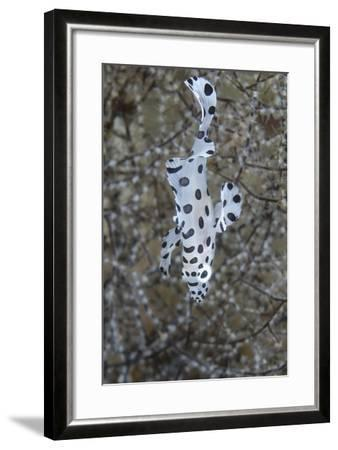 Indonesia, Bima Bay. Close-Up of Juvenile Sweetlips Fish-Jaynes Gallery-Framed Photographic Print