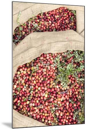 Massachusetts, Wareham, Cranberries-Jim Engelbrecht-Mounted Photographic Print