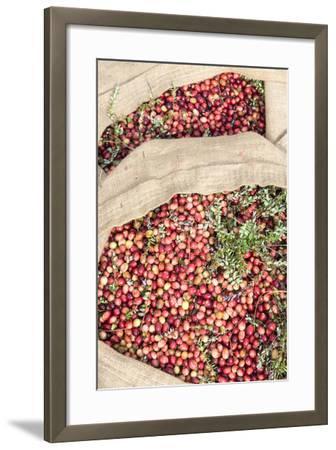 Massachusetts, Wareham, Cranberries-Jim Engelbrecht-Framed Photographic Print