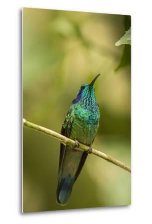 Central America, Costa Rica, Monteverde Cloud Forest Biological Reserve-Jaynes Gallery-Metal Print