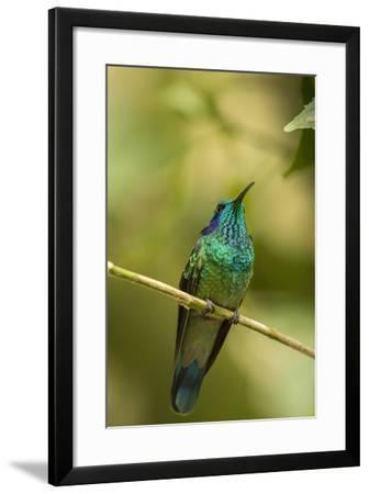 Central America, Costa Rica, Monteverde Cloud Forest Biological Reserve-Jaynes Gallery-Framed Photographic Print