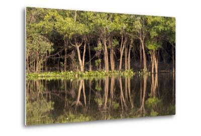 Brazil, Mato Grosso, the Pantanal, Rio Negro. Trees Along the Rio Negro-Ellen Goff-Metal Print