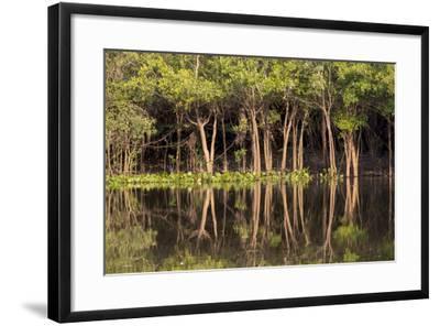 Brazil, Mato Grosso, the Pantanal, Rio Negro. Trees Along the Rio Negro-Ellen Goff-Framed Photographic Print