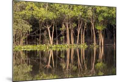 Brazil, Mato Grosso, the Pantanal, Rio Negro. Trees Along the Rio Negro-Ellen Goff-Mounted Photographic Print
