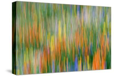 Wildflower Abstract, Tehachapi Mountains, Angeles National Forest, California, Usa-Russ Bishop-Stretched Canvas Print