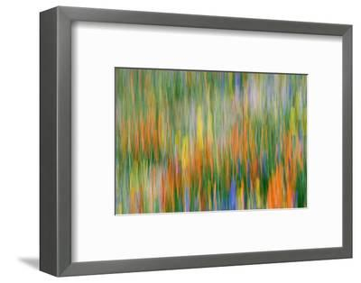 Wildflower Abstract, Tehachapi Mountains, Angeles National Forest, California, Usa-Russ Bishop-Framed Photographic Print