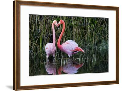 Ecuador, Galapagos Islands, Isabela, Punta Moreno-Ellen Goff-Framed Photographic Print