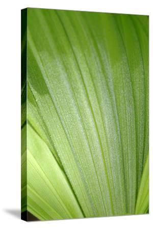Canada, British Columbia, Cowichan Valley. Honeymoon Bay Wildflower Reserve. Close-Up of Green Leaf-Kevin Oke-Stretched Canvas Print