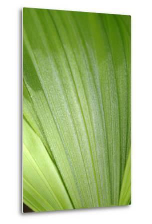 Canada, British Columbia, Cowichan Valley. Honeymoon Bay Wildflower Reserve. Close-Up of Green Leaf-Kevin Oke-Metal Print