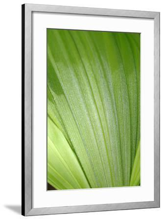 Canada, British Columbia, Cowichan Valley. Honeymoon Bay Wildflower Reserve. Close-Up of Green Leaf-Kevin Oke-Framed Photographic Print