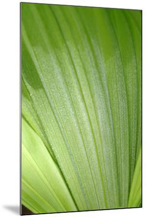 Canada, British Columbia, Cowichan Valley. Honeymoon Bay Wildflower Reserve. Close-Up of Green Leaf-Kevin Oke-Mounted Photographic Print