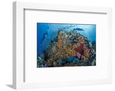 Indonesia, West Papua, Raja Ampat. Diver and Coral Reef-Jaynes Gallery-Framed Photographic Print
