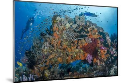 Indonesia, West Papua, Raja Ampat. Diver and Coral Reef-Jaynes Gallery-Mounted Photographic Print