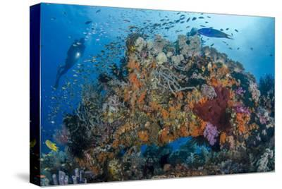 Indonesia, West Papua, Raja Ampat. Diver and Coral Reef-Jaynes Gallery-Stretched Canvas Print