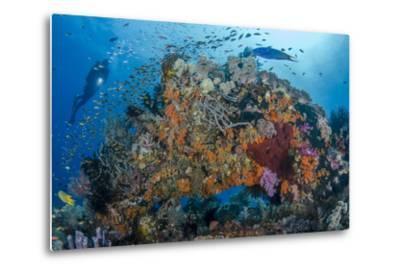 Indonesia, West Papua, Raja Ampat. Diver and Coral Reef-Jaynes Gallery-Metal Print