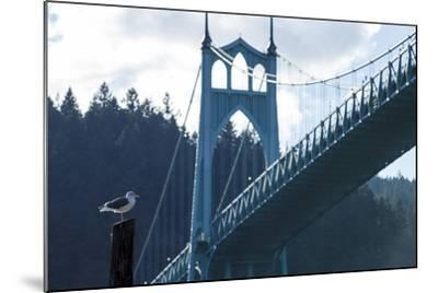 Oregon, Portland, Cathedral Park, Western Gull in Front of St. John's Bridge-Rick A^ Brown-Mounted Photographic Print