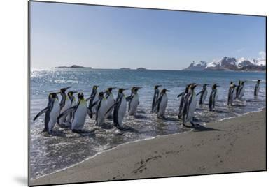 South Georgia Island, Salisbury Plains. Group of King Penguins on Beach-Jaynes Gallery-Mounted Photographic Print